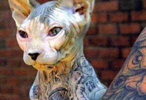 Tierquälerei mit Tattoos