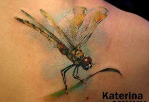 Die zerbrechlichen Libellen