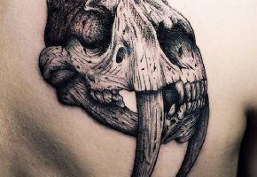 Animal Skulls - Tier-Skelette