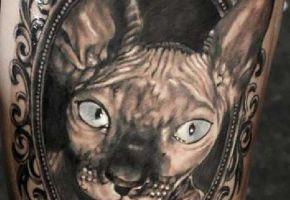 24 Sphynx Katzen Tattoos