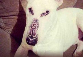 Tierquäler tätowiert seinen eigenen Hund