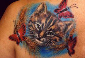 Katzen-Motive