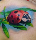ladybird_001