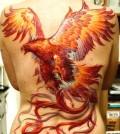 phoenix_005
