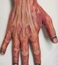Tattoo, Anatomic, Realistic, Hand, Muscle, Muskel