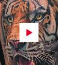 577-Videos-der-Woche-