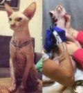 tattoo-news-katze-01